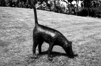 dog-for-web